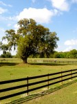 Paddock with live oak.