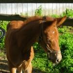 Rue Baby, Bedelia, has her mama's GIANT ears!
