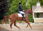 Barcelona RH at the Markel/USEF 4 y.o. Championships in Illinois