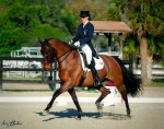 Farleight kicked off his blue ribbon season with a win in the Developing Horse Qualifier in Venice, FL
