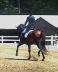 Farleight showing off his trot at GMHA