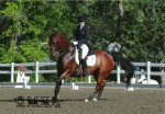 Wilde Card winning his PSG class at GMHA Dressage Days
