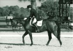 Wilde Card had a great 1st year at FEI - Good Boy!