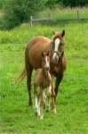 SPS Weltfee II (Weltmeyer) and 2012 Bretone Filly