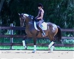 Schooling piaffe at home