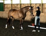 Bahai at her Mare Performance Test