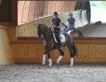 At Hassler Dressage in the Developing Dressage Training Session. (Photo: Ricard Malmgren)