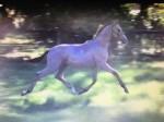 Mulder RH as a foal