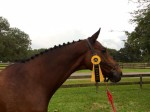 Wilber with Saturday's ribbon