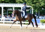 Faro SQF - Developing Horse PSG