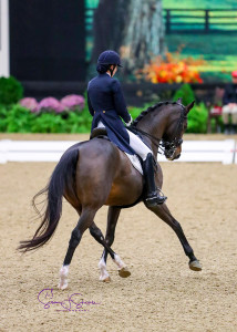 Bahai - US Dressage Finals