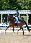 Fifi MLW - Developing Horse PSG